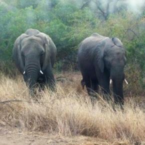 Elephant Crush