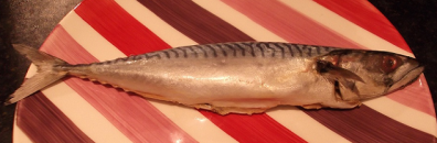 Cropped Mackerel