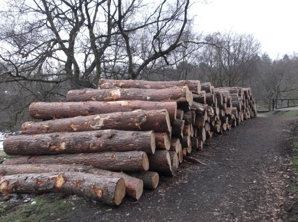 One Logs