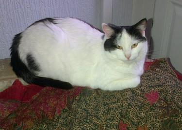 my cat Natalie Portman